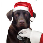 Order Customized Christmas Cards for Your Business!
