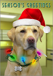 Veterinarian Patient Christmas Card